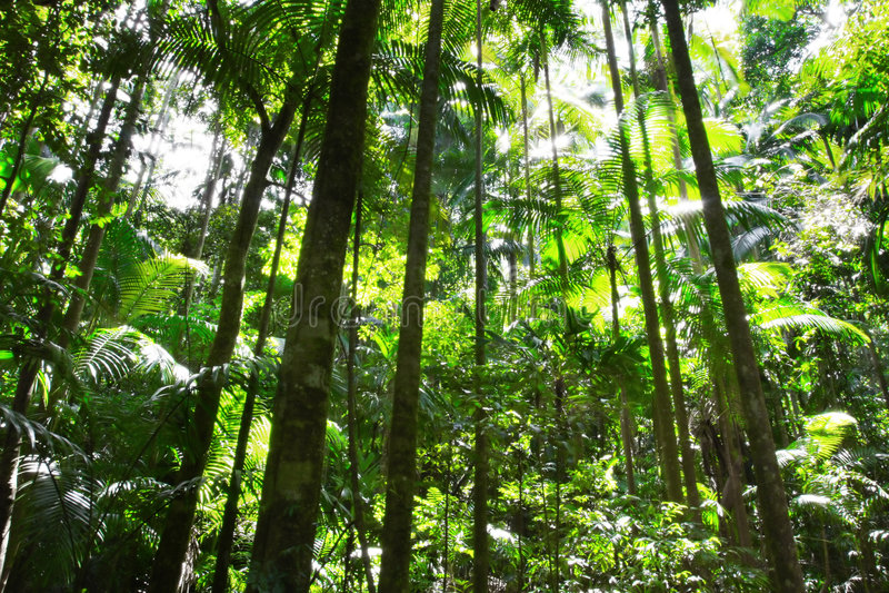 forêt humide image stock