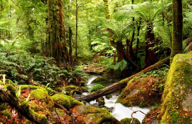 Forêt humide antique photographie stock libre de droits
