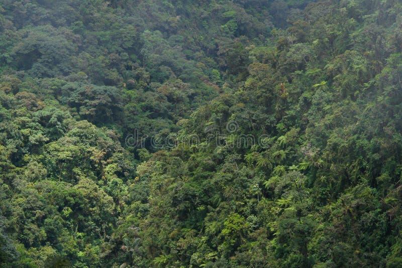 Forêt humide dans les Andes boliviens, Yungas image libre de droits