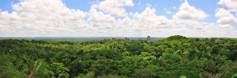 Forêt humide de Tikal, Guatemala images libres de droits