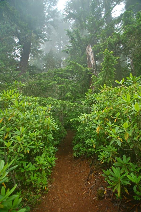 Forêt humide du nord-ouest Pacifique images stock