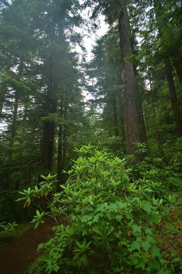 Forêt humide du nord-ouest Pacifique photos stock