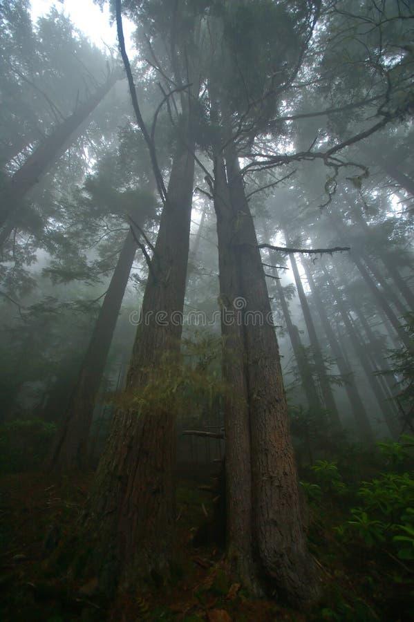 Forêt humide du nord-ouest Pacifique photographie stock