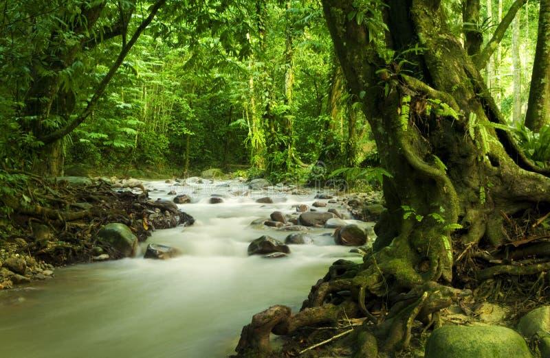 Forêt humide et fleuve tropicaux photographie stock libre de droits