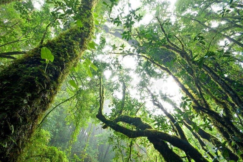 Forêt humide, nord de la Thaïlande photographie stock libre de droits