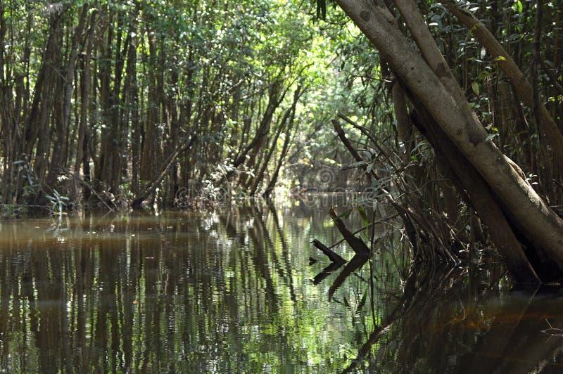 Forêt humide noyée d'Amazone image libre de droits
