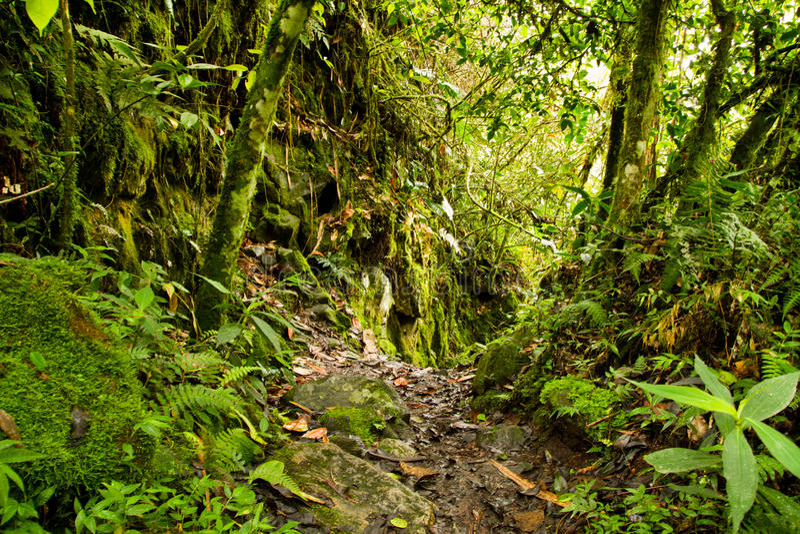 Forêt humide tropicale en stationnement national, Equateur photos stock