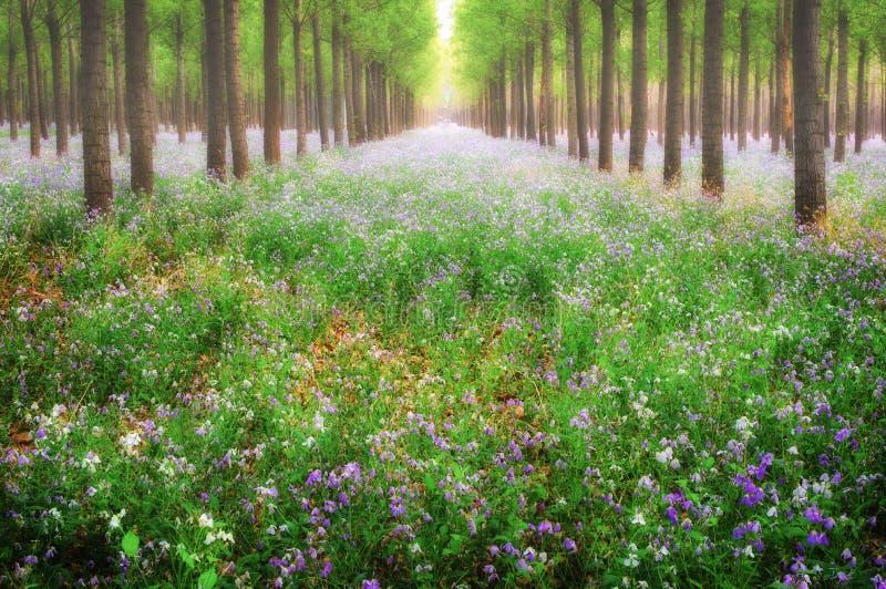 Forêt idyllique image libre de droits