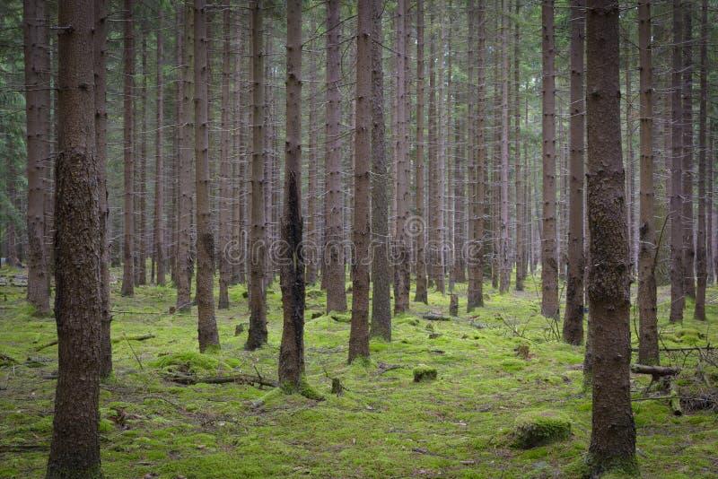 Forêt impeccable photo stock