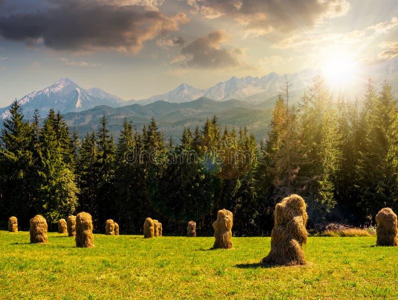 Download Forêt Impeccable Sur Un Pré Dans Tatras Au Coucher Du Soleil Image stock - Image du ciel, été: 77153831