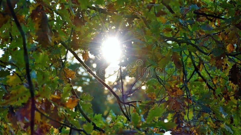 Forêt jaunie par paysage d'automne avec des rayons du soleil images stock