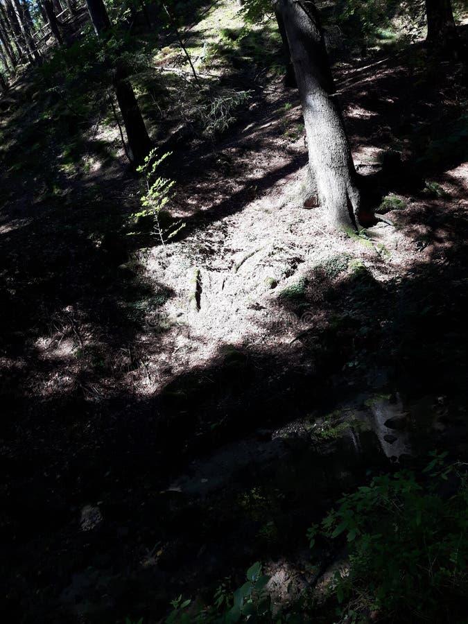 Forêt légère image stock