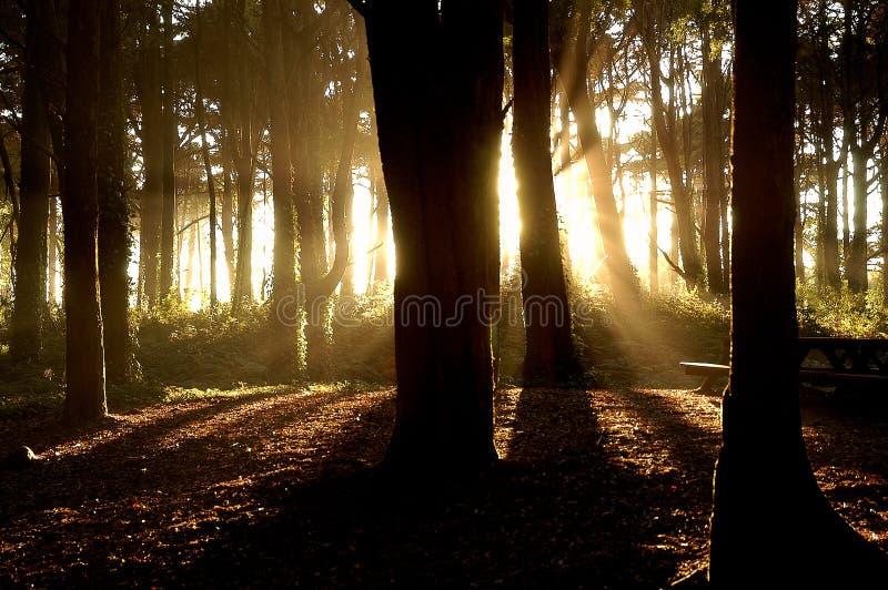 Forêt légère images libres de droits