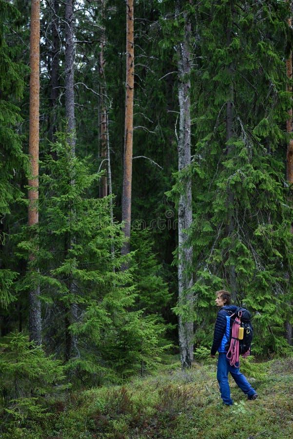 Forêt l'explorant de randonneur, forêt karélienne de pin, Scandinavie photos stock
