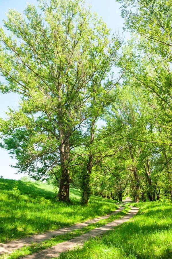 Forêt lumineuse d'été photos libres de droits