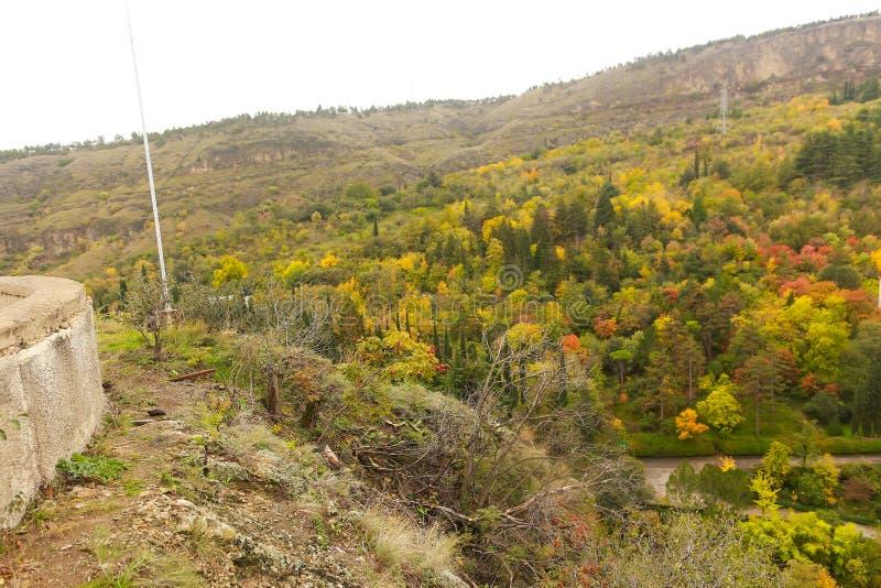 Forêt luxuriante en Géorgie image stock