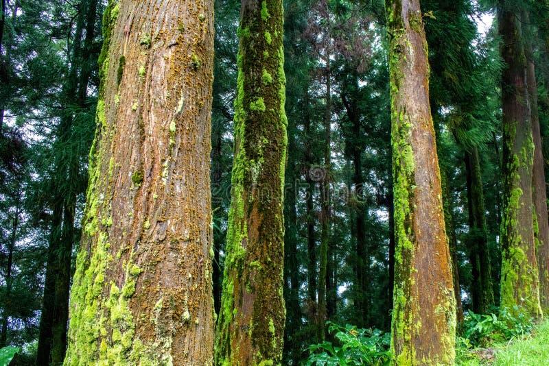 Forêt luxuriante verte sur l'île du sao Miguel, Açores, Portugal photos libres de droits