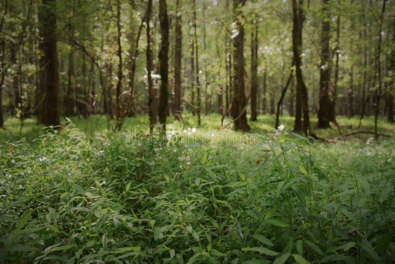 Forêt magique photo libre de droits