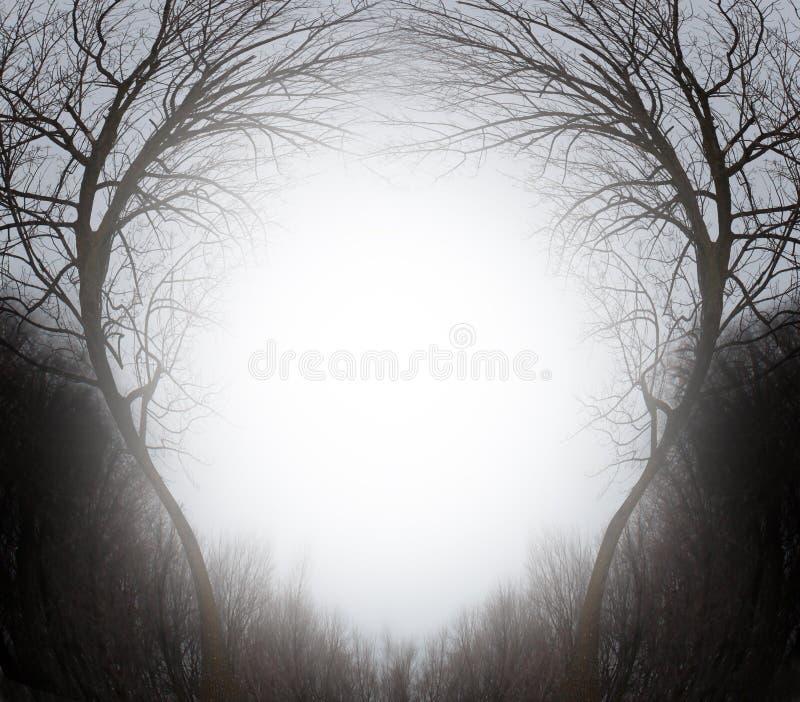 Forêt magique illustration libre de droits