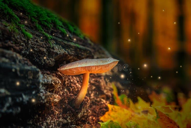 Forêt magique avec les champignons et les lucioles rougeoyants au crépuscule photos libres de droits