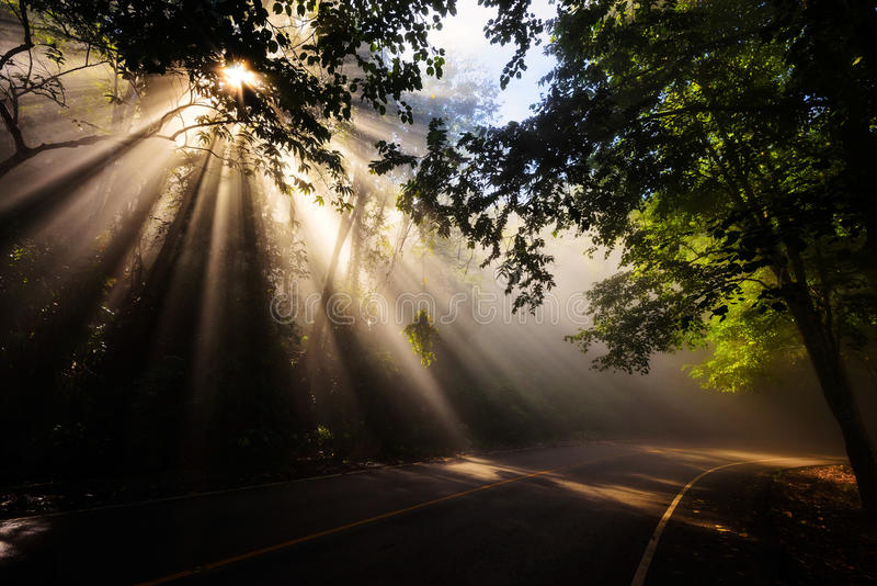 Forêt magique avec les rayons légers photographie stock