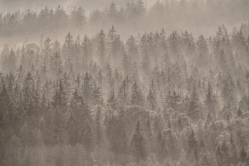 Forêt magique d'automne avec des rayons du soleil dans le matin image stock