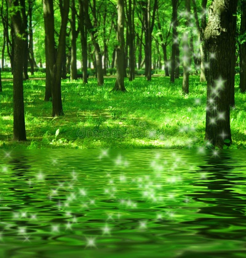 Forêt magique près du fleuve photographie stock libre de droits