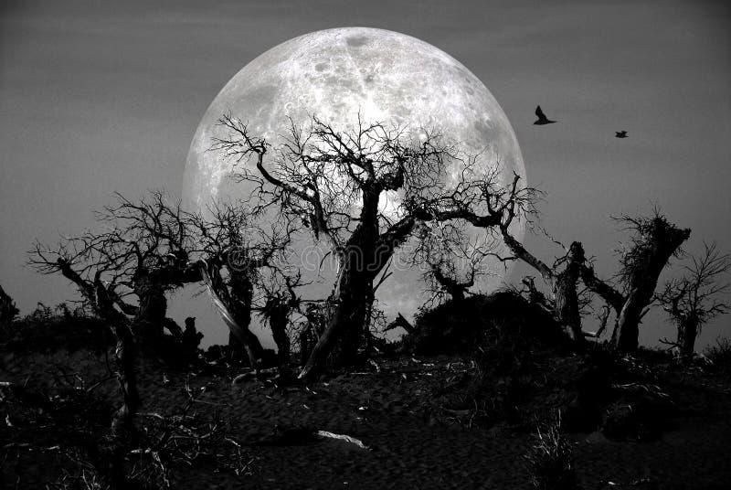 Forêt morte photos libres de droits
