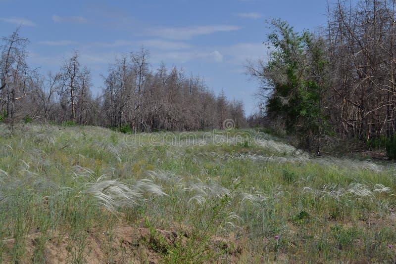 Forêt morte photo libre de droits