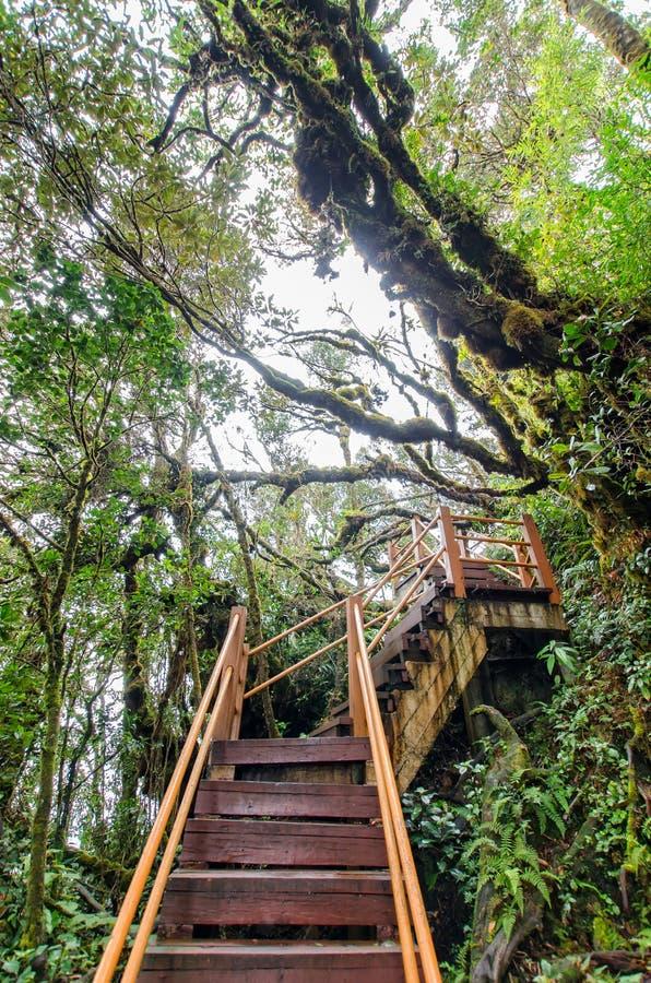 Forêt moussue de Gunung Brinchang, Cameron Highlands images libres de droits