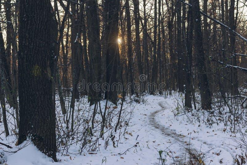 Forêt mystérieuse à la soirée après première neige Paysage magique d'hiver image libre de droits