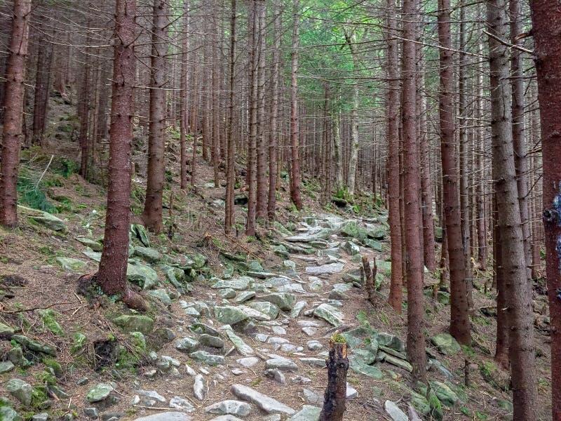 Forêt mystérieuse dans les montagnes photographie stock