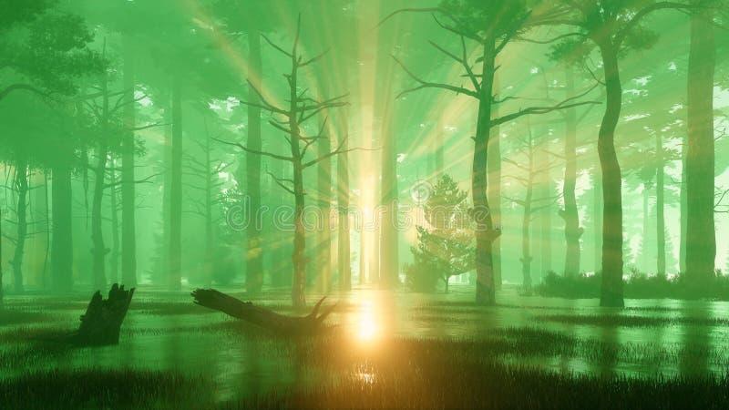 Forêt mystérieuse et marécageuse foncée de pin au coucher du soleil illustration stock