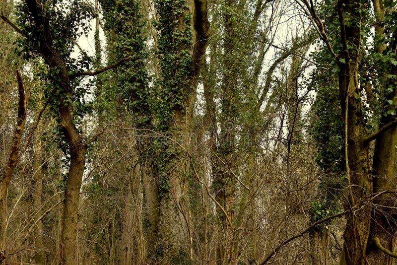Forêt mystérieuse sombre foncée pendant le matin image stock