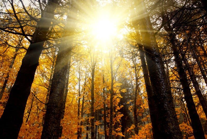 Forêt mystique image libre de droits
