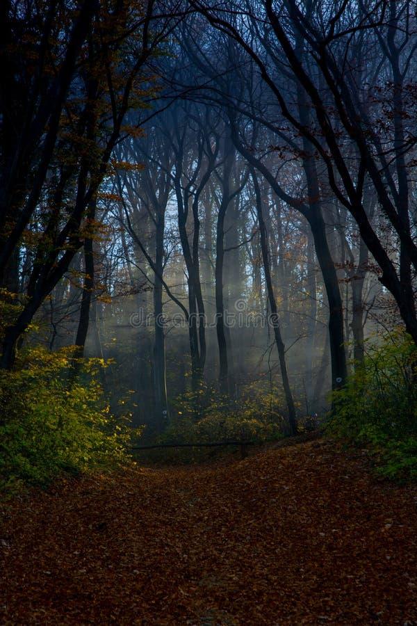 Forêt mystique photos libres de droits