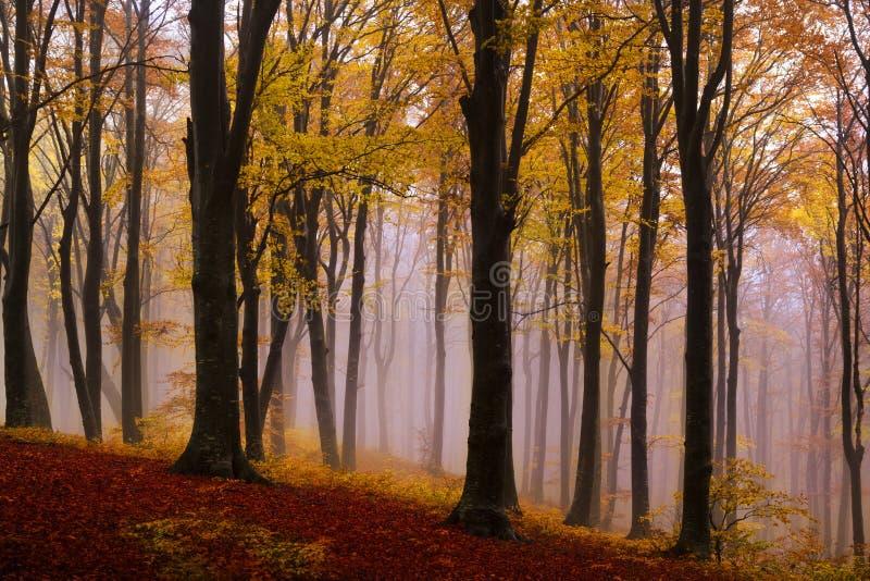 Forêt mystique brumeuse pendant la chute photographie stock libre de droits