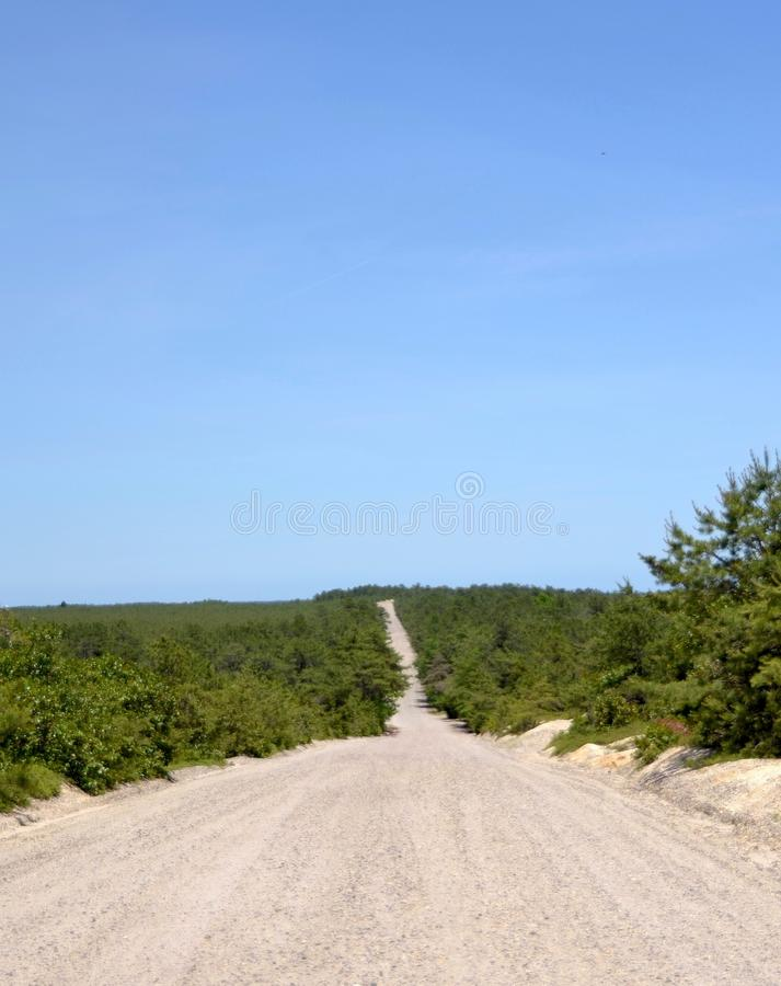 Forêt naine de pin images libres de droits