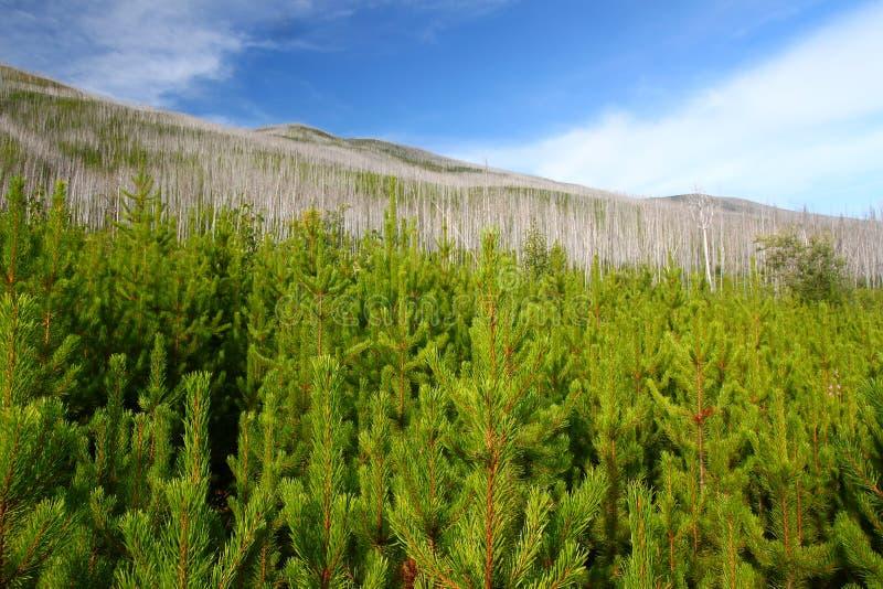 Forêt nationale à tête plate - Montana photo stock
