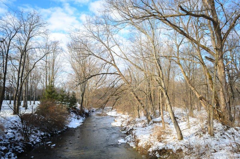 Forêt nationale d'Allegheny image libre de droits