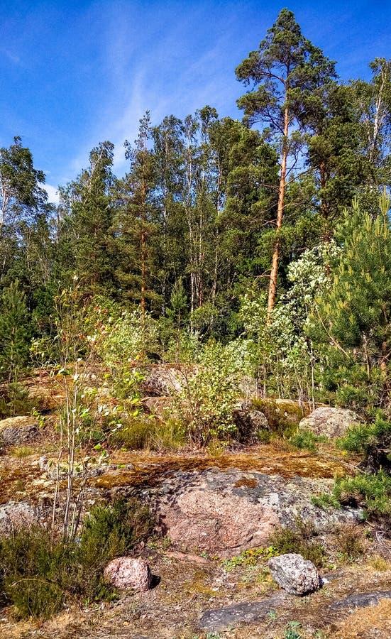 Forêt naturelle avec des rochers de granit Nature du nord, forêt un jour ensoleillé avec des nuages dans le ciel photos stock