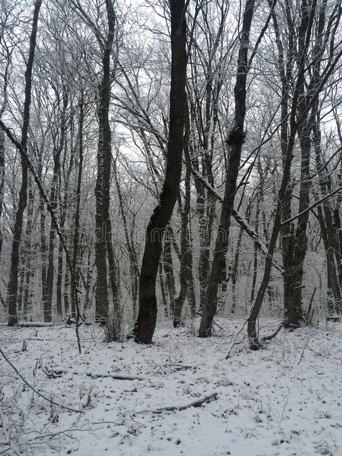 forêt neigeuse d'hiver solitaire photo stock
