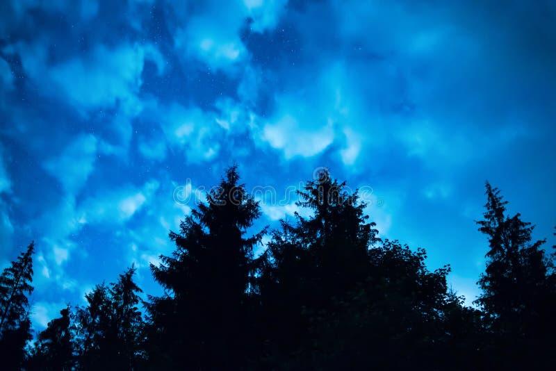 Forêt noire avec des arbres au-dessus de ciel nocturne bleu images stock