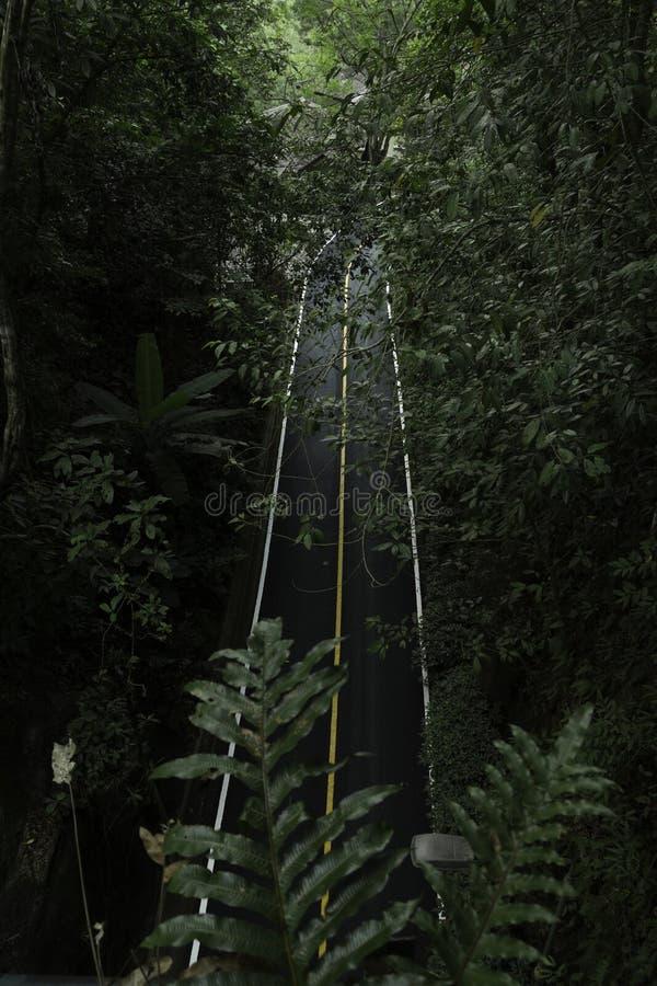 Forêt noire de route photographie stock libre de droits