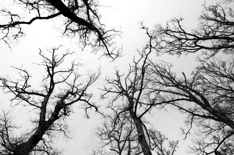 Forêt noire et blanche image libre de droits