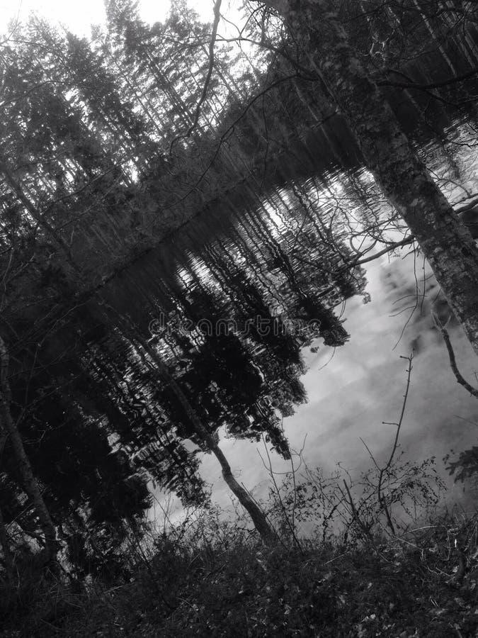 Forêt noire et blanche images stock