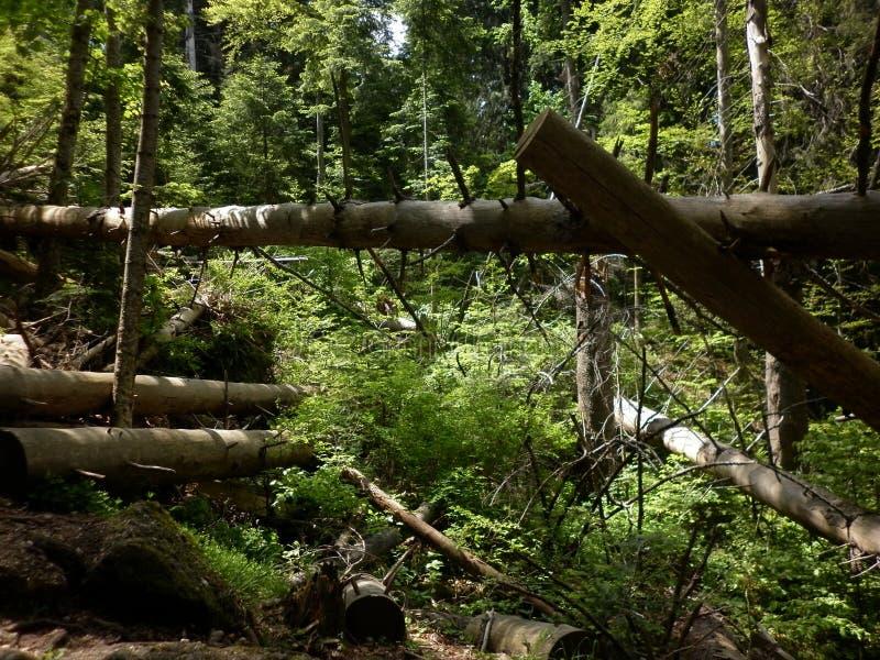 Forêt normale images libres de droits