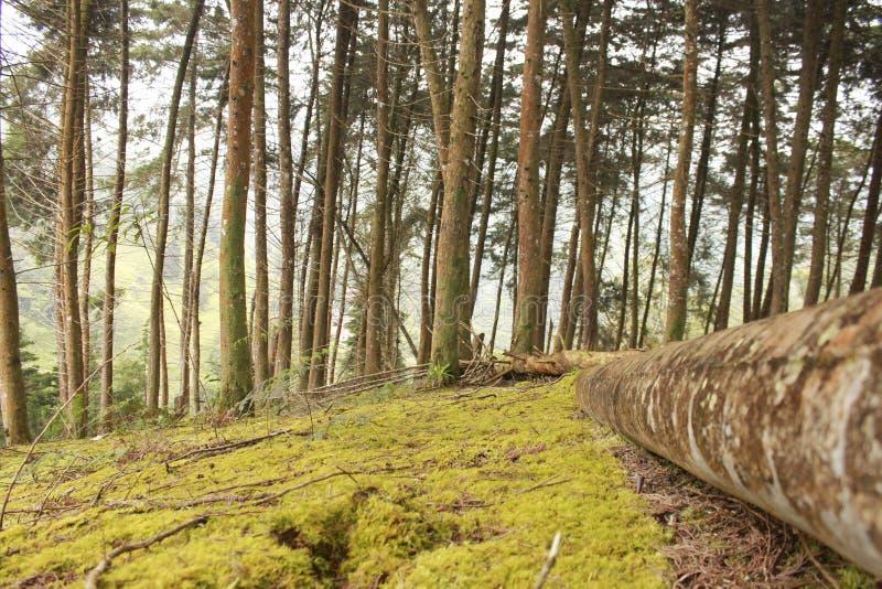 Forêt nuageuse en Colombie image libre de droits