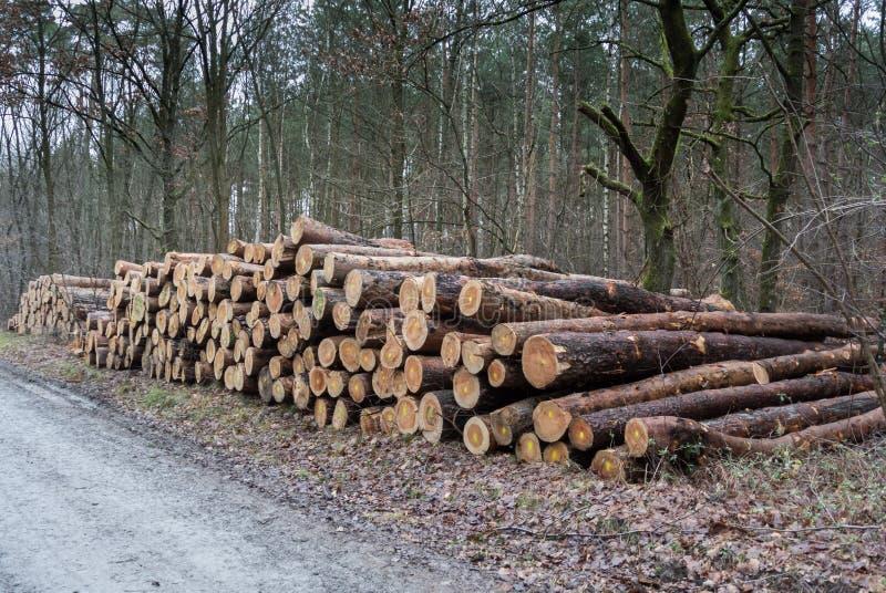Forêt ouvrante une session photos libres de droits
