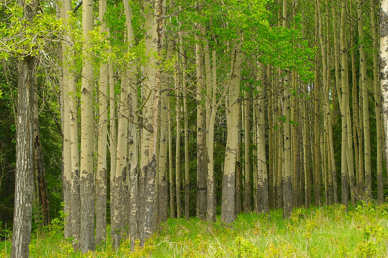 Forêt paisible image stock